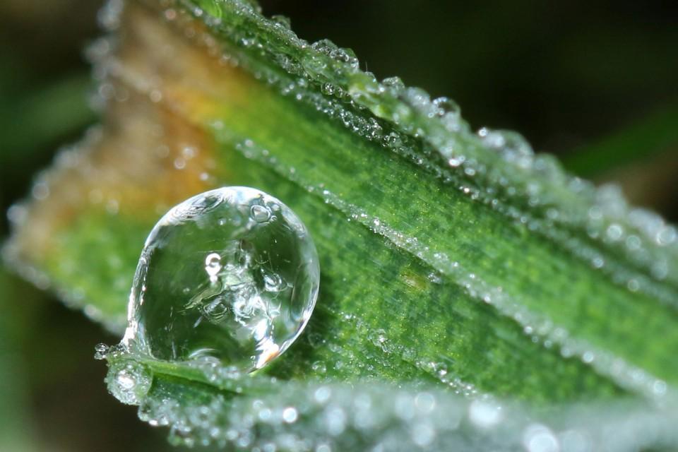 gefrorener Tautropfen im Gras 06.01.18