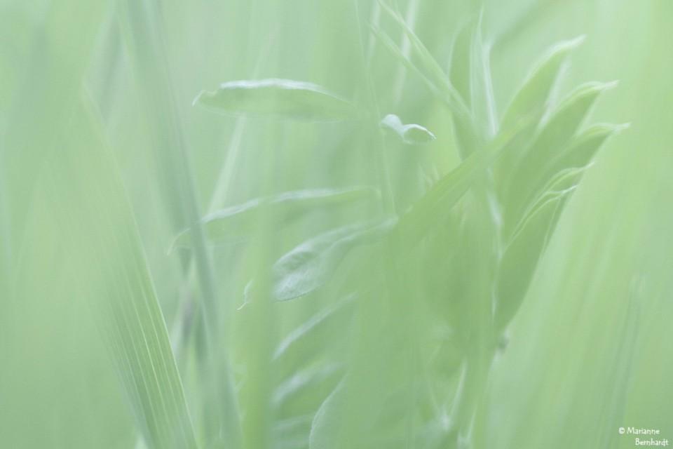 im Gras gibt es auch andere Formen...